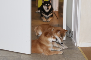 Pärlan, Lara och Tai