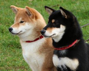 Mimi och Lara