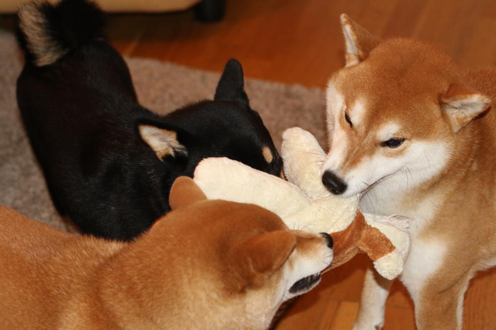 Boy, Lara och Mimi leker