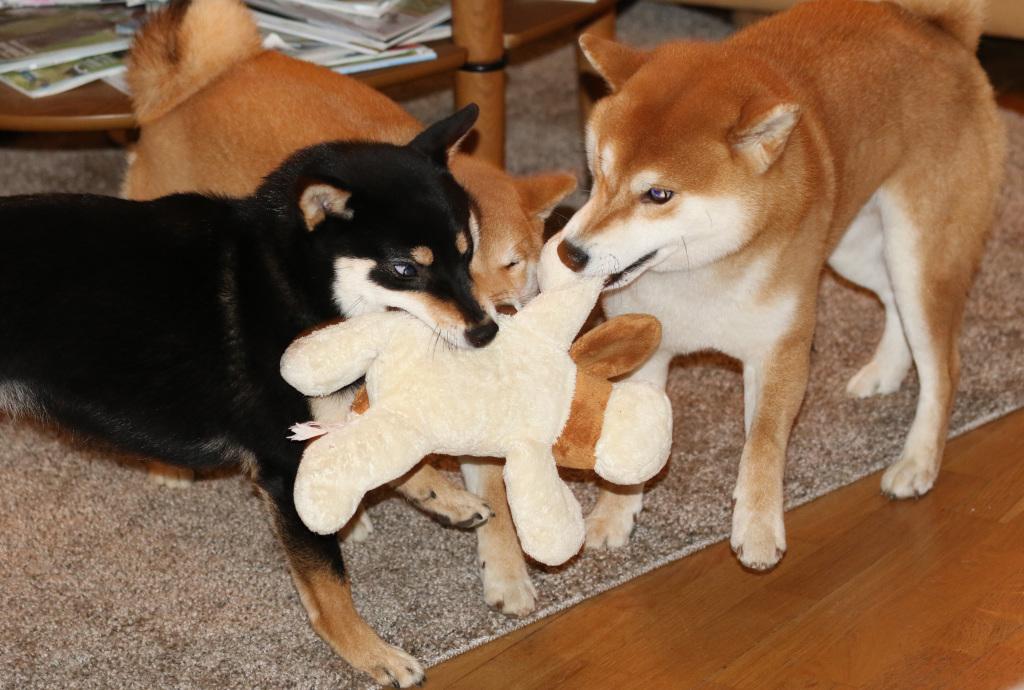 Boy, Mimi och Lara leker