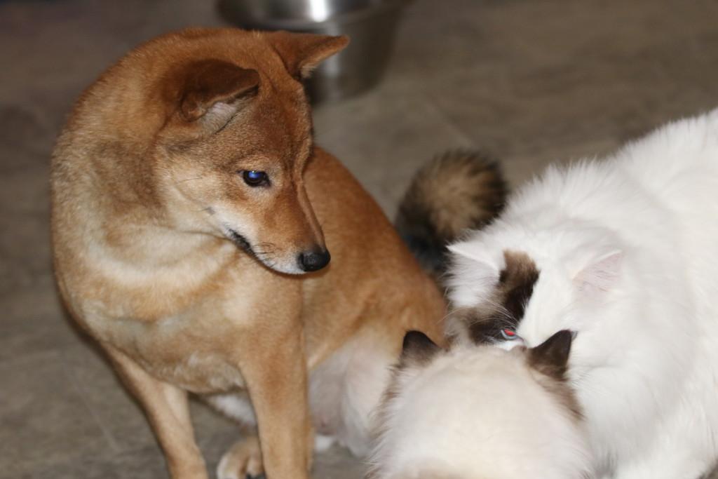 Zelda och katterna