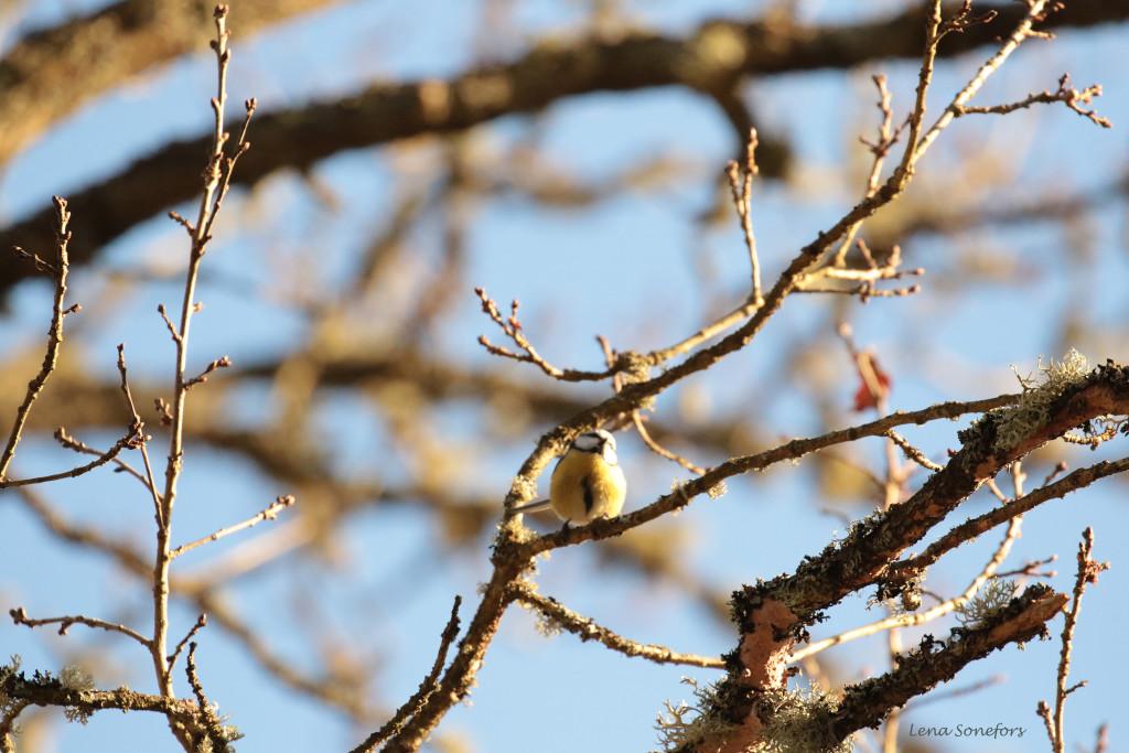 Fågel i trädet!