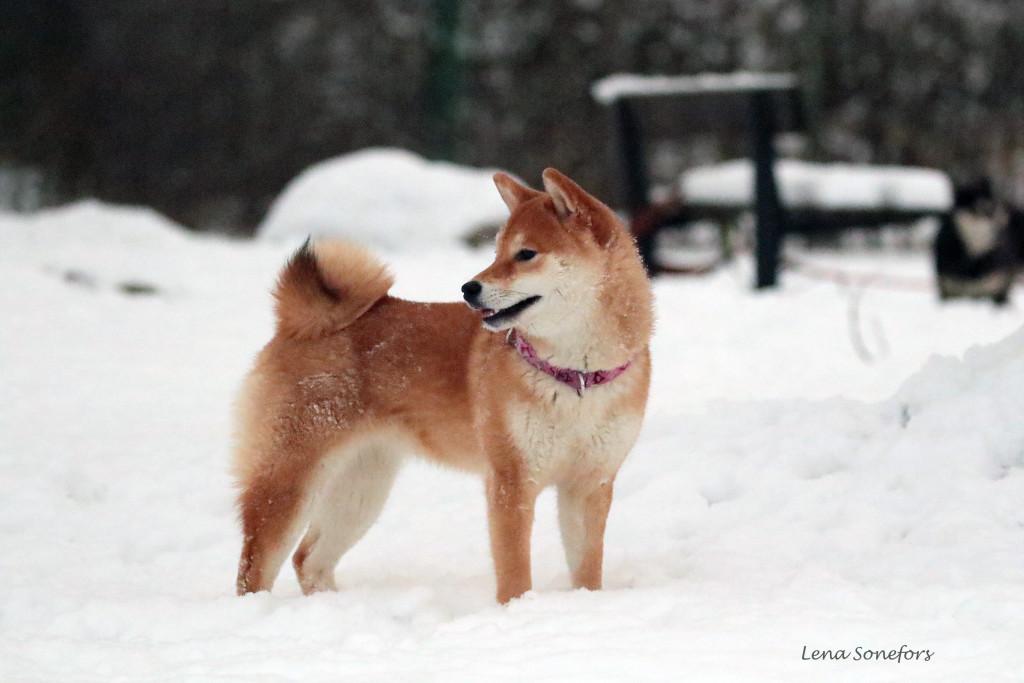 http://media.sutamuroku.com/2015/01/lara22-1024x683.jpg
