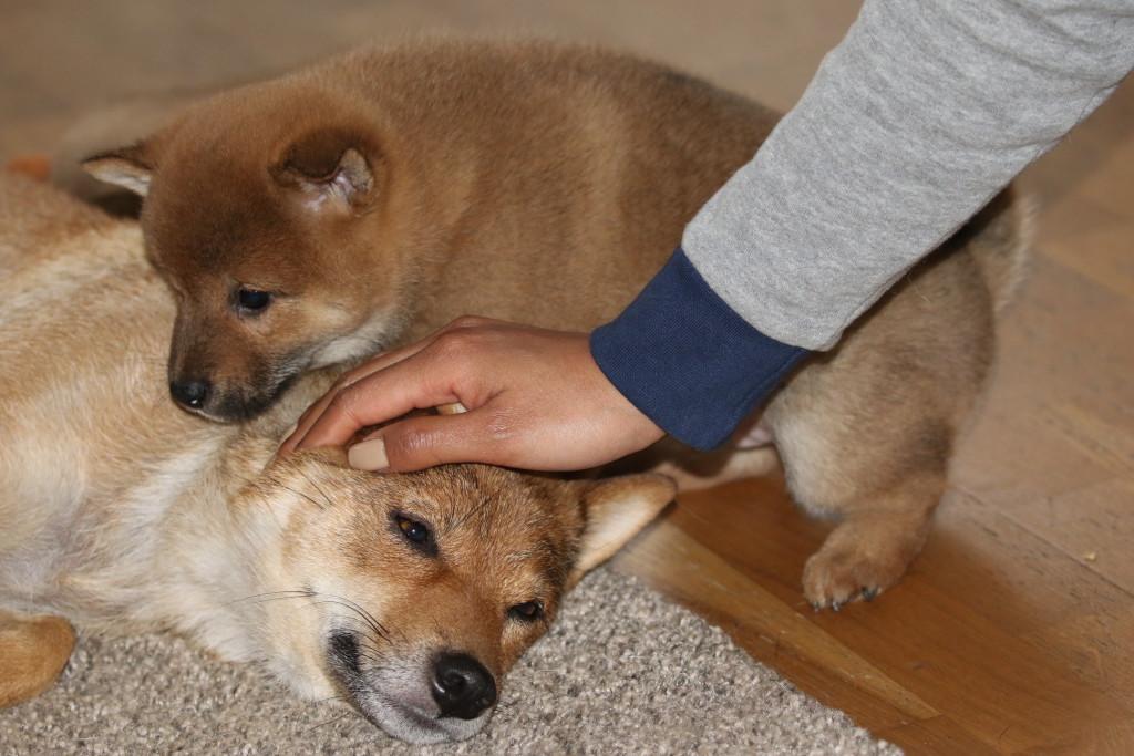 Zelda och mattes hand