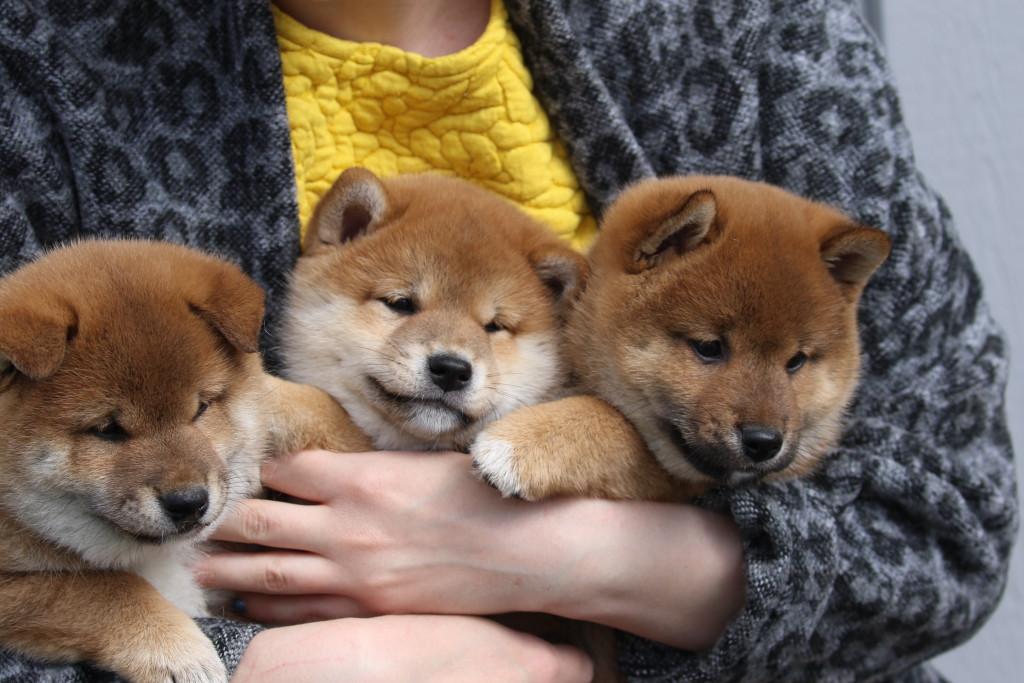 3 små rascals