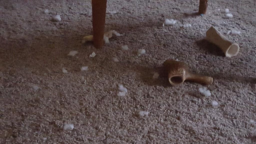 Laras verk! Ännu ett gosedjur har dött...