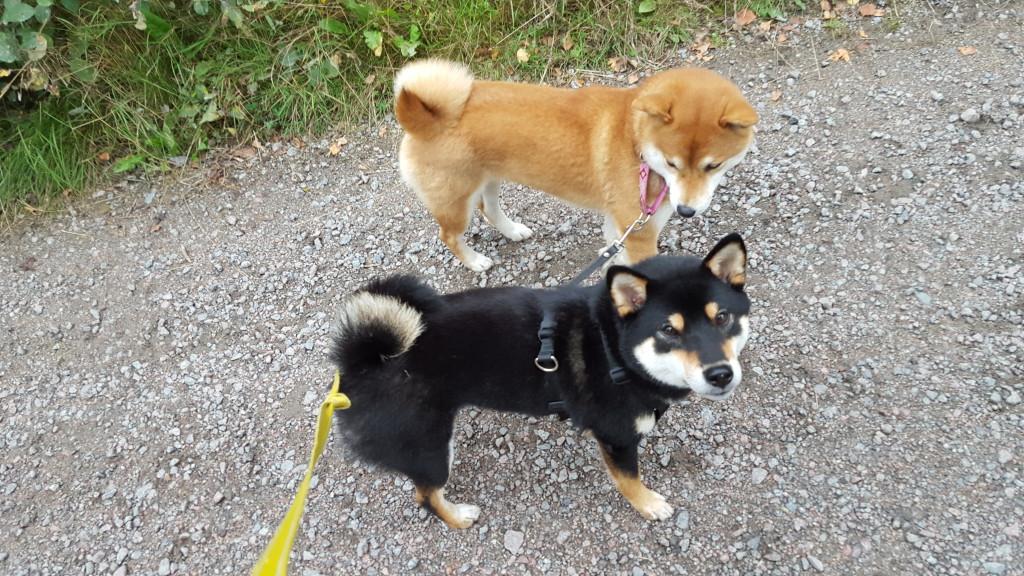 Mimi och Lara är ihopkopplade