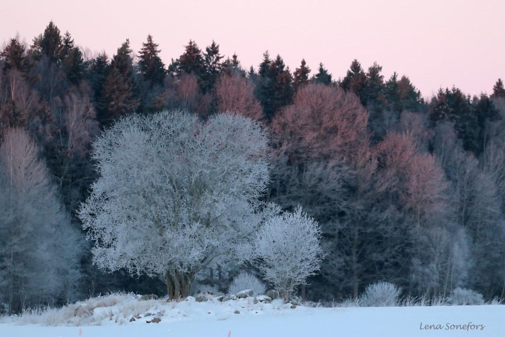 vinter216