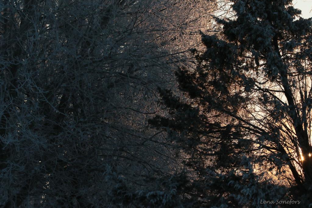 vinter816
