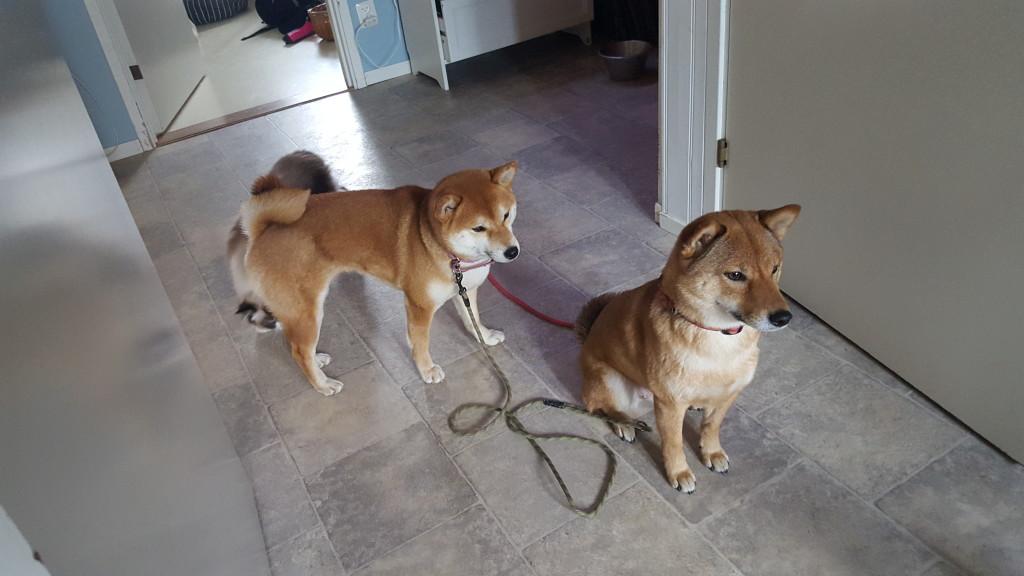 Ska vi gå ut snart?